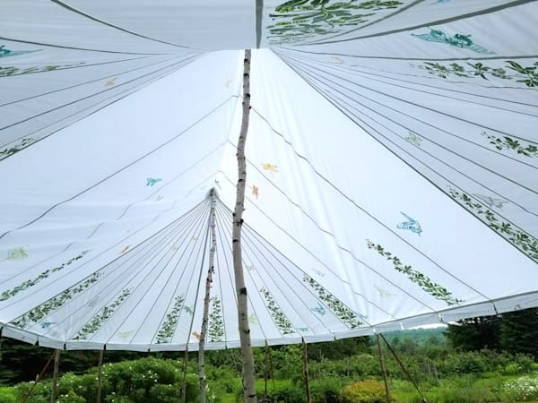 Butterfly tent carsrf