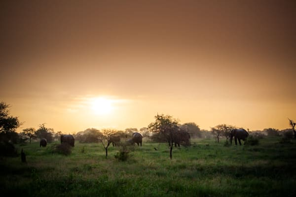 20101221 elephants at sunset img 2574 vvnjkv