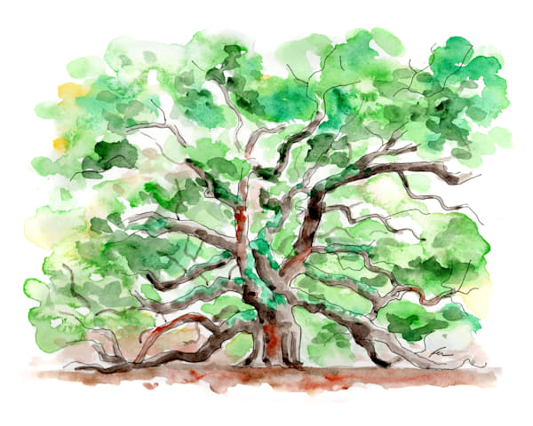 Angel Oak Watercolor Art Print