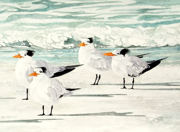 A Sandra Galloway watercolor print on fine-art paper of four Terns standing on the beach.