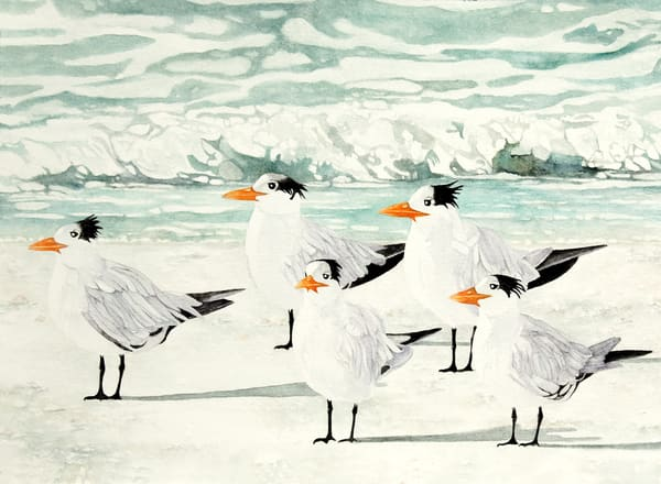 Detailed, close-up watercolor painting of four Terns standing on the beach, enjoying the ocean breeze by Sandra Galloway.  Printed on  fine-art paper