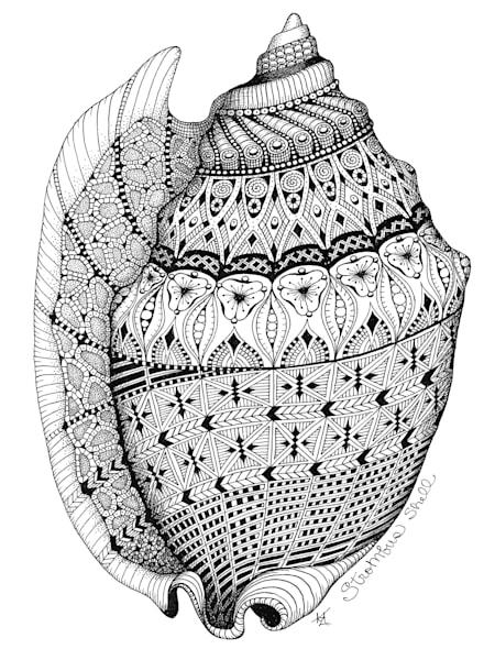 Strombus Shell