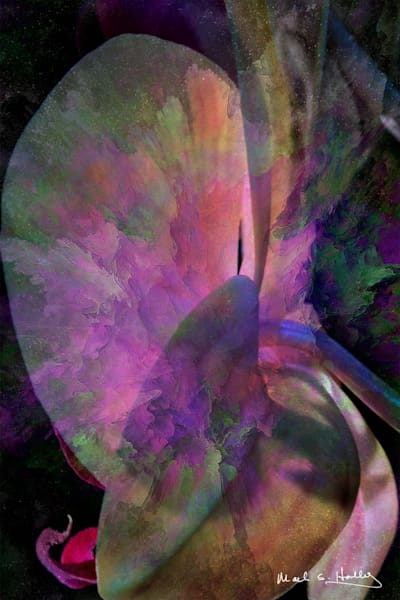 flower, orchid, abstract, realism, contemporary