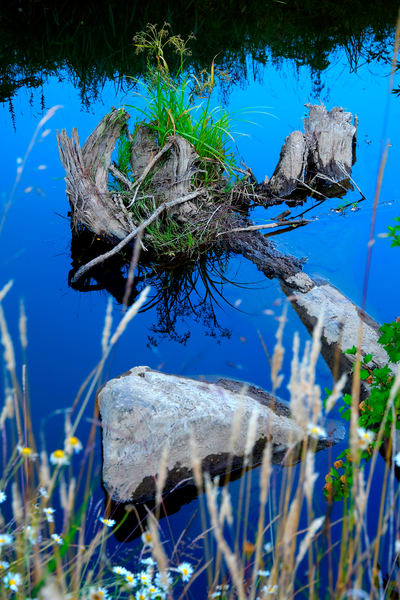 Rock And Stump Reflections