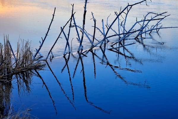 Branch Reflections