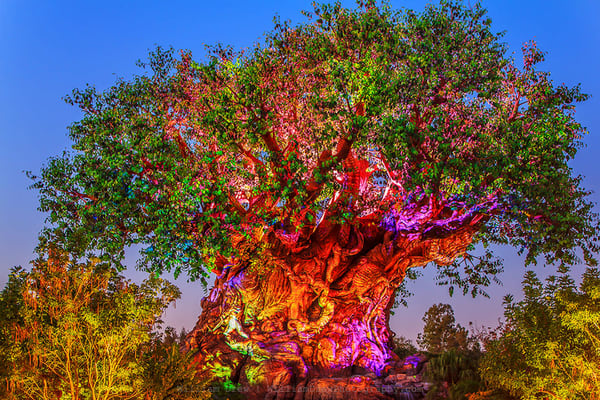 Animal Kingdom at Night - Disney Wall Murals | William Drew