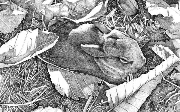 Hazel (Carol's Bunny)