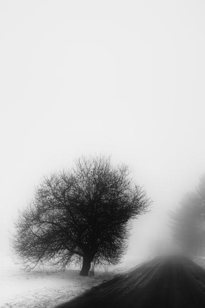 Misty Vermont Spring