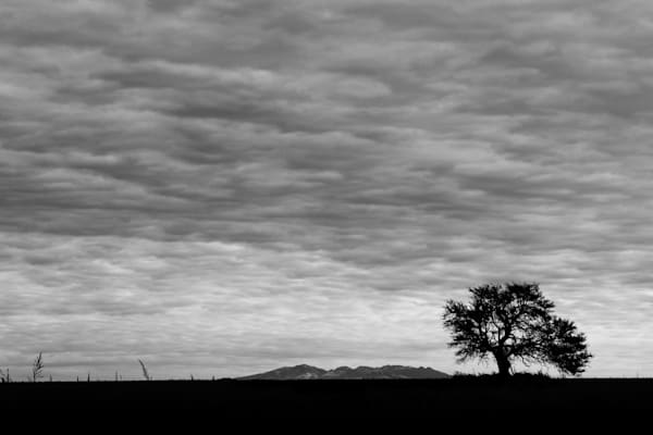 On the Plains of Argentina