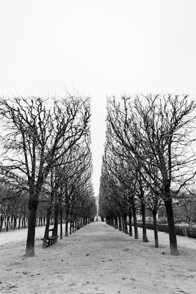 Winter in the Jardin du Palais Royal in Paris