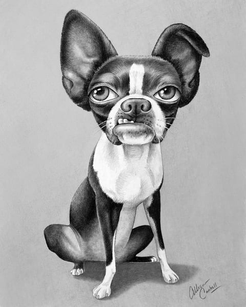 Suzy with the Attitude! Fine art Boston Terrier print
