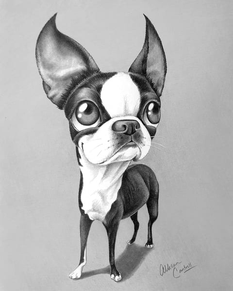 Stella - fine art Boston terrier print from BunnyPigs