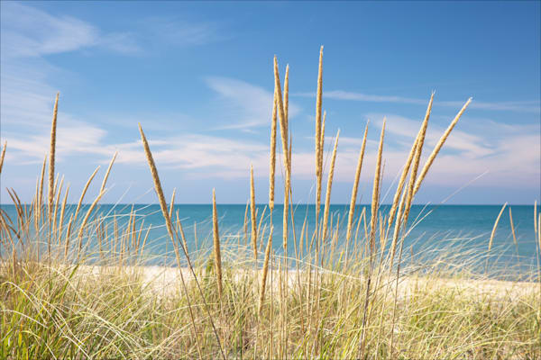 Marram Grass, Warren Dunes