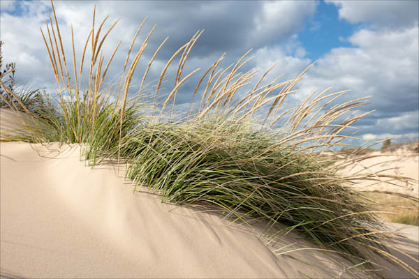 Marram Grass, Silver Lake