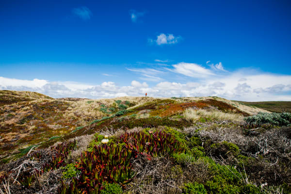 Photograph prints of the California dunes and succulents at Point Reyes National Seashore.