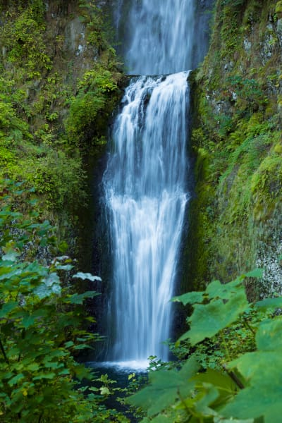 Multnomah Falls Greenery Photography Art | Leiken Photography