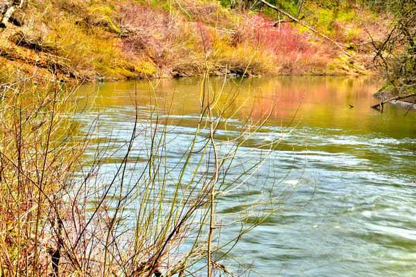 Early Spring Yamhill River