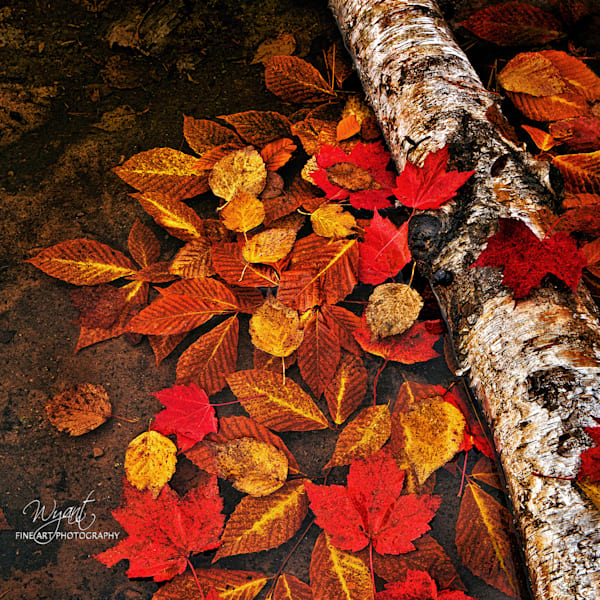 Autumn Leaves in Water: Shop Fine Art Photography | Jim Wyant, Master Craftsman (317)663-4798