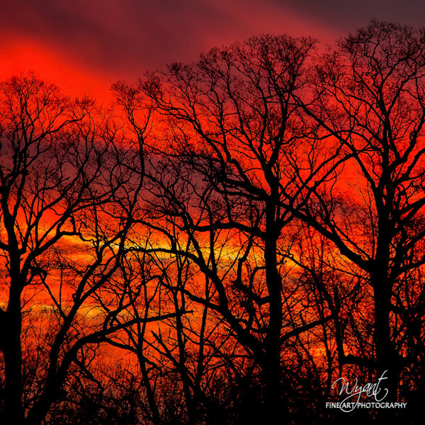 Sunset and Trees: Shop Fine Art Photography | Jim Wyant, Master Craftsman (317)663-4798