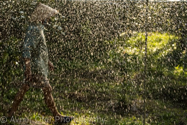 Vietnamese farmer  behind water droplets