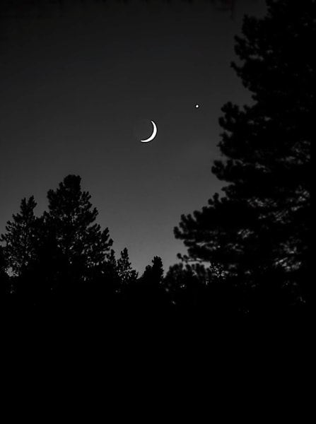 Luminous Light Collection - bw | Crescent Moon and Trees, northern Colorado - bw. A stunning black and white, fine art photograph by David Zlotky.