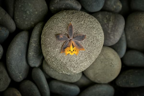 photographs of orchids on pebbles