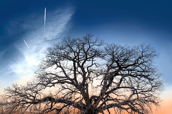 If You Love Trees Collection - color | Contrails - color. A fine art, color photograph of jet trails over Kansas by David Zlotky.