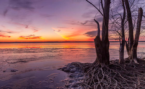 Frozen Rend Lake Shoreline No. 2
