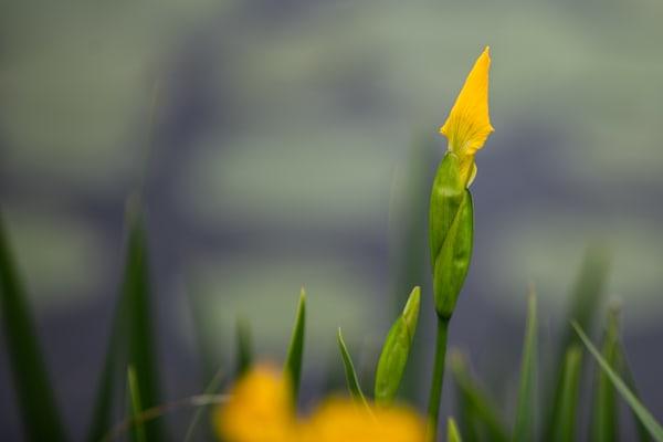 Near Bloom