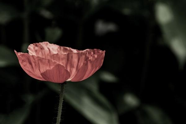 Sun Lit Petals