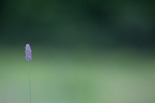Vermont Fields