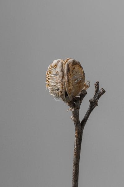 Hemerocallis Decomposed Color III