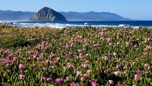 Ocean Ivy Bloom Photography Art | Josh Kimball Photography