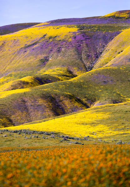 San Andreas Flowerburst Photography Art | Josh Kimball Photography