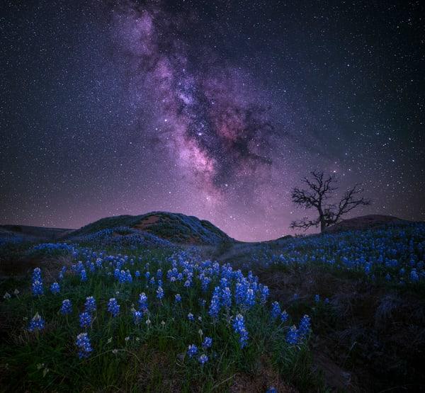 Starry Blues