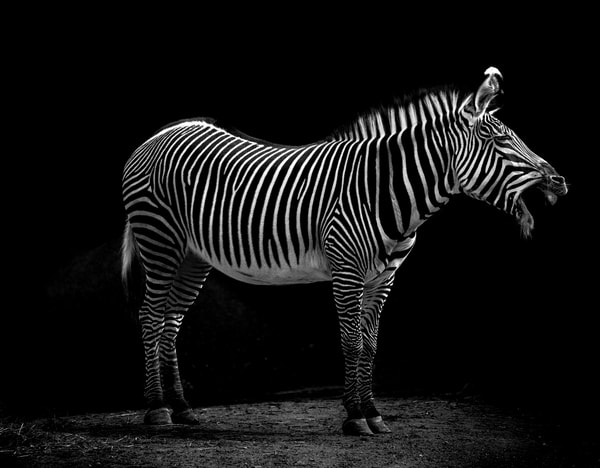 Striped Z s