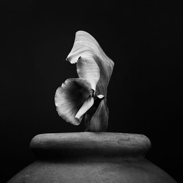 Untitled #7, Sprout Photography Art   William Couture