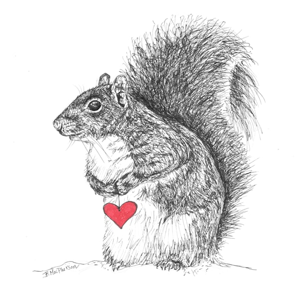 Squirrel with a Heart- Fine Art Print of Original Illustration by Becky MacPherson