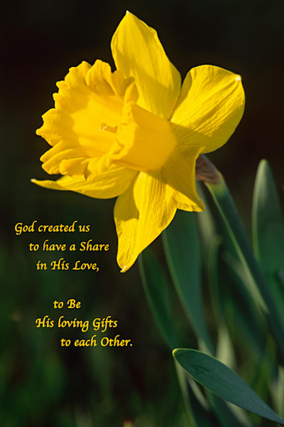 "Sunny daffodil with ""Loving Gifts"" quote - shop prints 