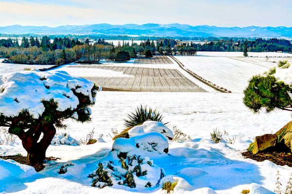 Anne Amie Vineyard Winter