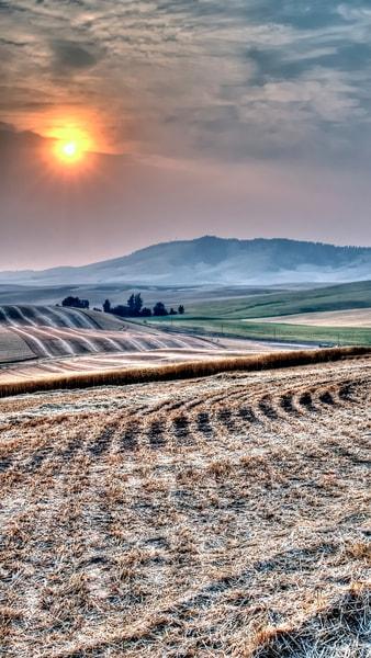 Harvest Sunset 7150