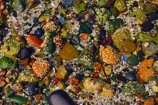 Acadia Tide Pools 002 RS TM