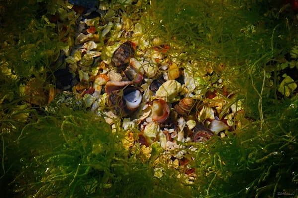 Acadia Tide Pools 010 RS TM
