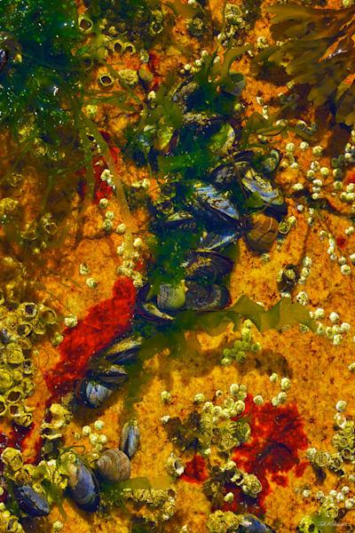 Acadia Tide Pools 009 RS TM