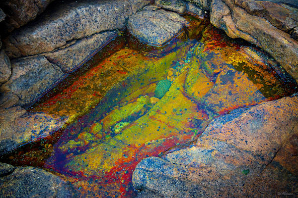 Acadia Tide Pools 013 RS TM