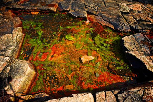 Acadia Tide Pools 012 RS TM