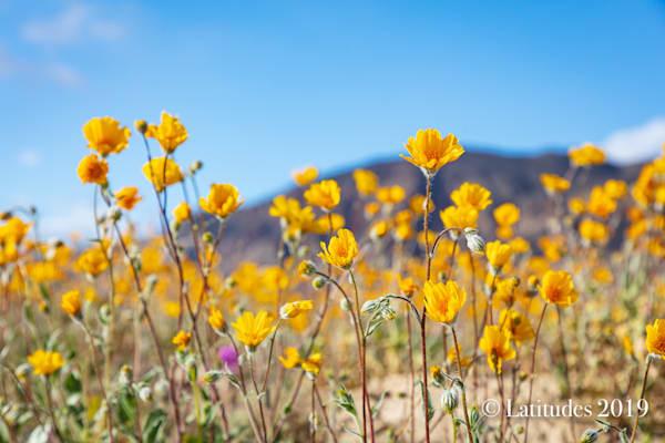 """Sweet Sunshine Bloom"""