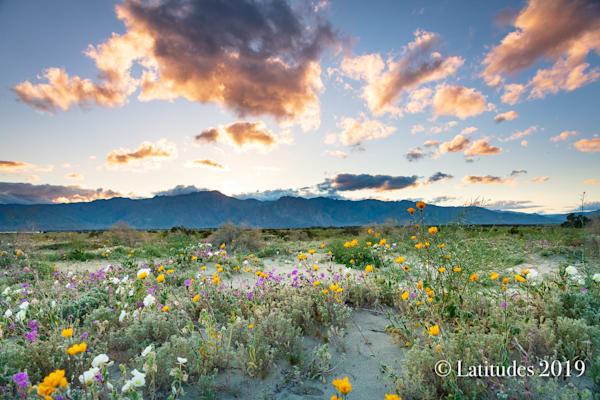 """""""Desert Spring"""""""