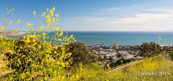 """Wildflower City View"""