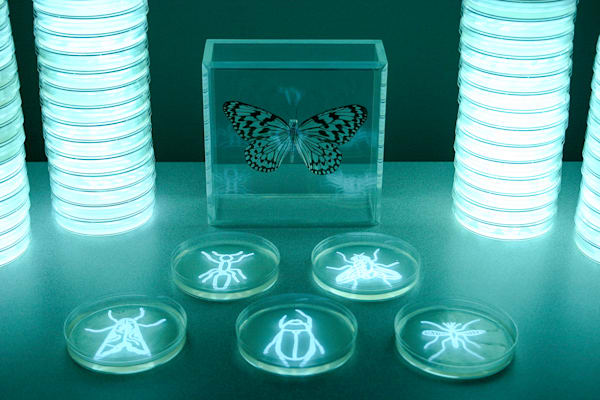 Insecta, Photograph by the Light of Bioluminescent Bacteria by Hunter Cole